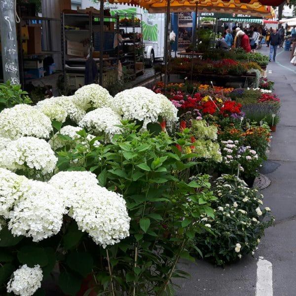 Hortensien und andere Blumen begrüßen den Besucher am Südeingang zum Markt.
