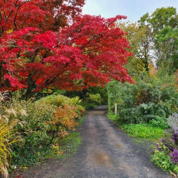 Herbststimmung im Alten Botanischen Garten