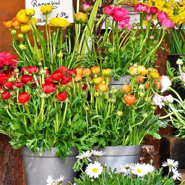 """Blumenläden: """"Das Lächeln der Natur"""""""